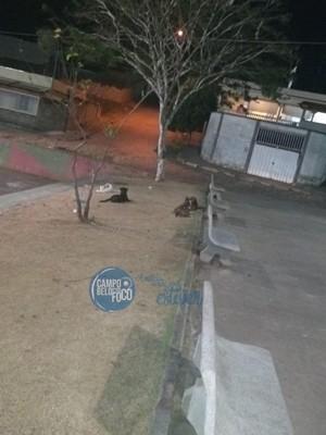 Jovem fica ferida após ser atacada por cães em Campo Belo, veja!