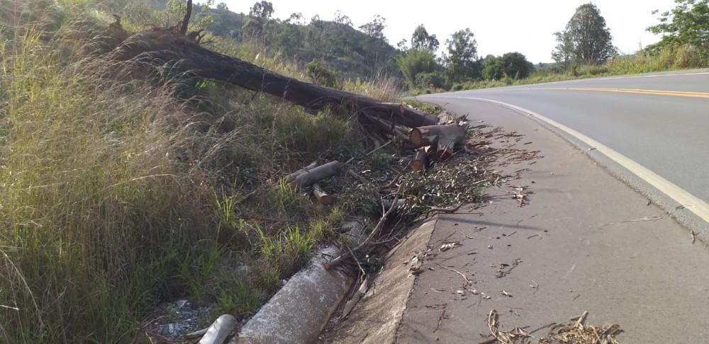 Chuva forte derruba árvore na BR-354, próximo a Toscano de Brito, veja as fotos!